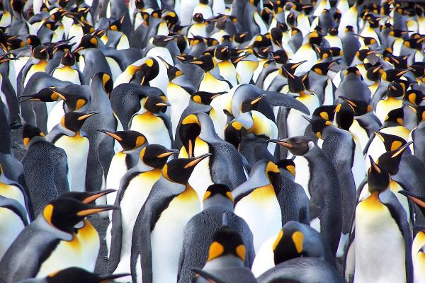 Antarctica Via Falklands and South Georgia Cruise Image